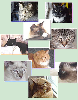 http://www.bemikitties.com/anew/catsnew2sm2.jpg