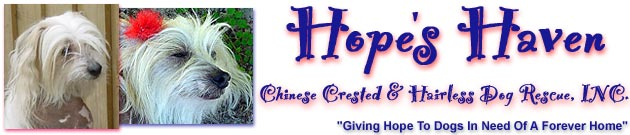 Hope's Haven - Chinese Crested and Hairless Dog Rescue, click to read Hope's Story